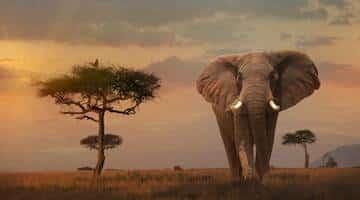 เที่ยวแอฟริกา